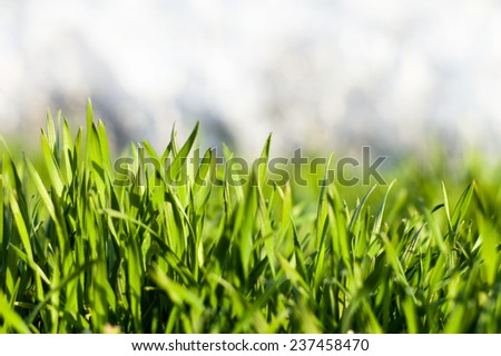Fresh juicy green grass with dew for your design - stock photo