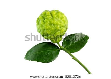 Fresh Kaffir Lime. - stock photo