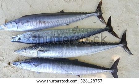 Wahoo fish stock images royalty free images vectors for Fishing kings free