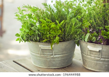 Fresh kitchen garden herbs in a galvanic bucket