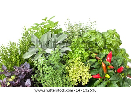Fresh kitchen herbs isolated on white background - stock photo