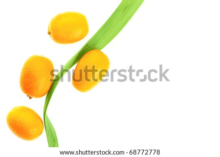 Fresh kumquats and green leaf isolated on white