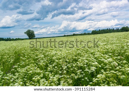 Fresh Landscape Plain Nature  - stock photo