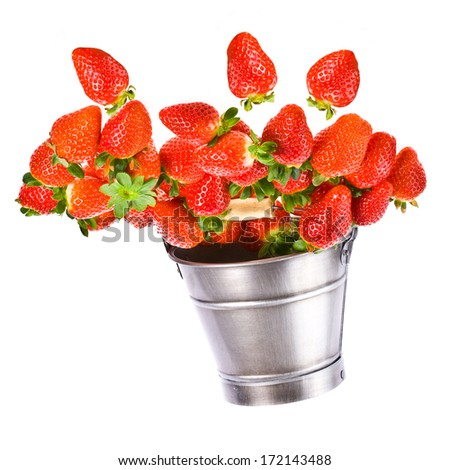 Fresh large strawberries poured up from a tin bucket  isolated on white background - stock photo