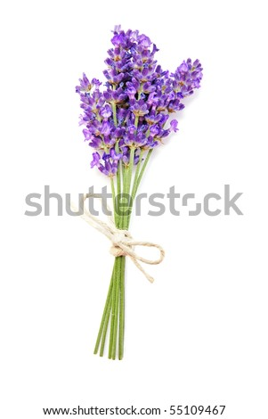 Fresh lavender flower on white