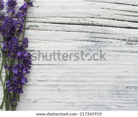 fresh lavender flowers - stock photo