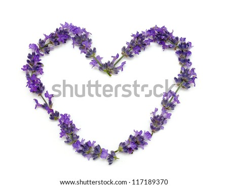 fresh lavender heart isolated on white background - stock photo