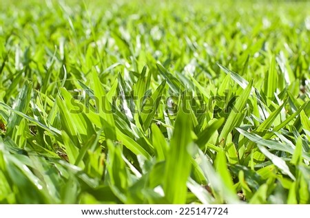 Fresh lawn in the early morning with sunshine - stock photo