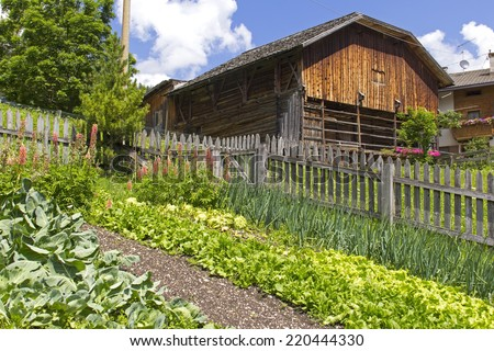Fresh leaf lettuce and onions in the cottage garden. Was seen in a little garden in south tyrol in the European Alps. Beautiful wooden barn in background. - stock photo