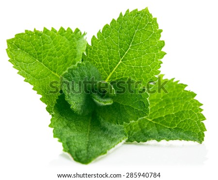 Fresh leaf mint. Isolated on white background - stock photo