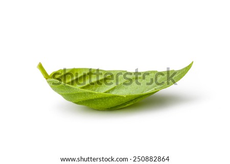 Fresh leaf of basil isolated on white background. Clipping path included. - stock photo