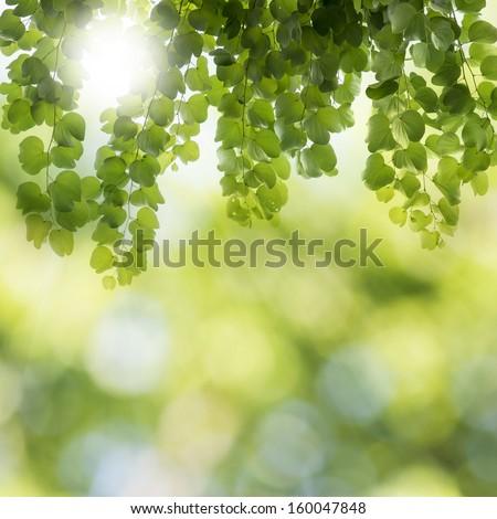 Fresh leaf on summer scene background - stock photo