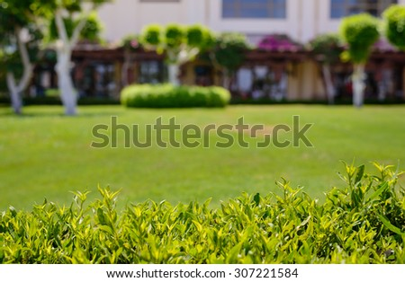 Fresh leafy green summer hedge and neatly manicured lawn with a building in the background in a shallow DOF nature background image - stock photo