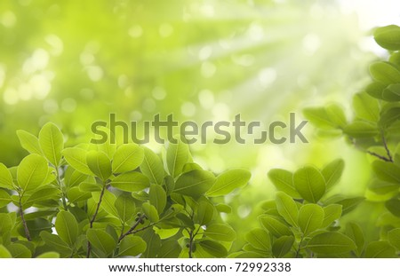 Fresh leaves background - stock photo