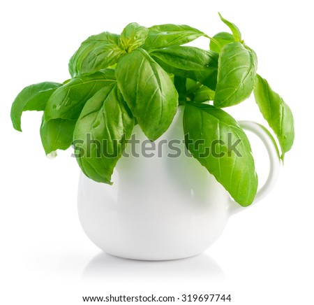 Fresh leaves basil in white vase. Isolated on white background. Illustration - stock photo
