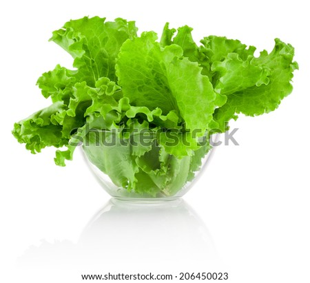 Fresh leaves green Lettuce in transparent bowl isolated on white