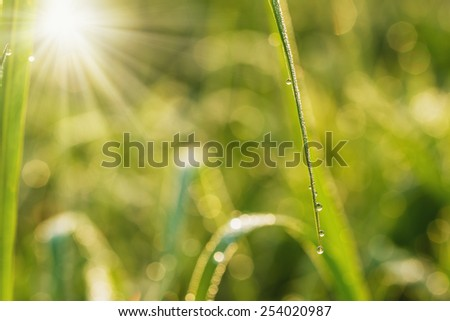 Fresh leaves green with dew drops close up with sunlight