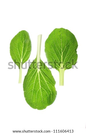 fresh leaves of bok choy (Brassica rapa chinensis) against a white background