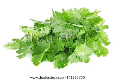 fresh leaves of cilantro isolated on white background - stock photo