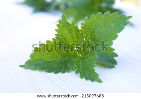 Fresh leaves of nettle on a bright  background - stock photo