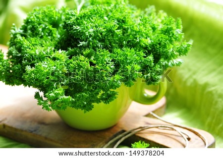 Fresh leaves of parsley in green cup - stock photo