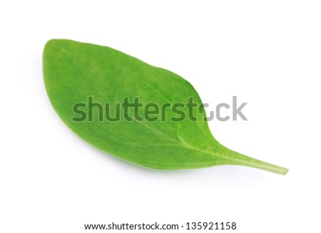 Fresh leaves spinach, isolated