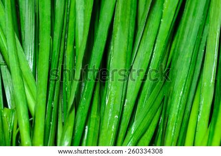 Fresh Leek/fresh green onions background - stock photo