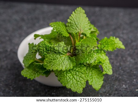 Fresh lemon balm herb .(Melissa officinalis) - stock photo