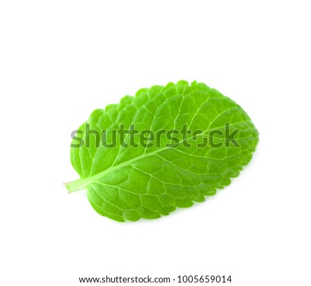 Fresh lemon balm leaf on white background