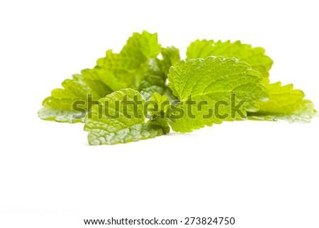 fresh lemon balm leaf on white background, isolated,  - stock photo