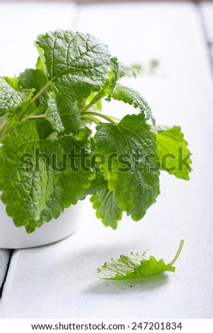 Fresh lemon balm leaves . Melissa officinalis. - stock photo