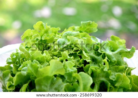 Fresh lettuce in a bowl - stock photo