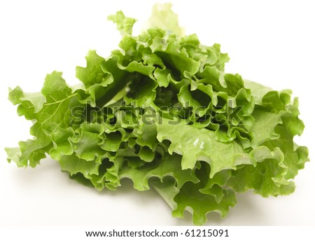 fresh lettuce isolated on white background - stock photo