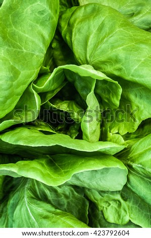 Fresh Lettuce Leaves, Close Up - stock photo