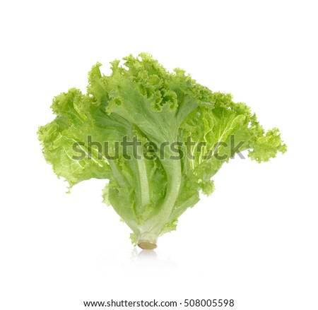 fresh lettuce leaves isolated on white background.