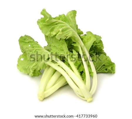 Fresh lettuce on white background - stock photo