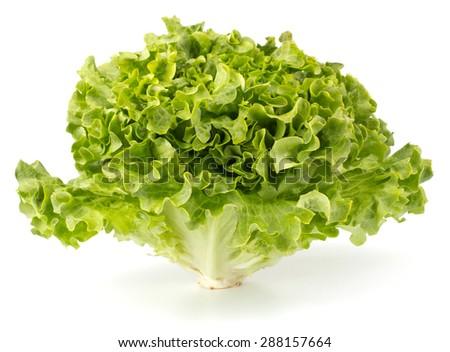 Fresh lettuce salad bunch isolated on white background - stock photo