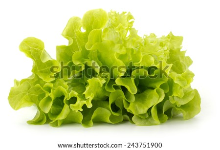 Fresh lettuce salad leaves bunch isolated on white background - stock photo