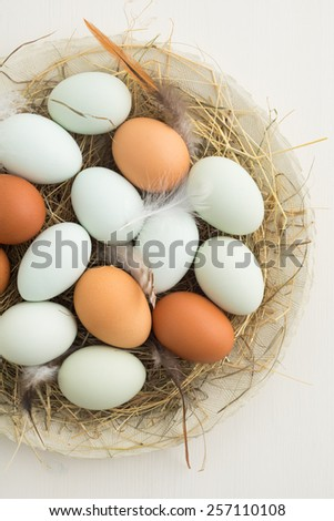 Fresh light green eggs from Easter egger chicken and brown eggs in a nest made of straw on a plate