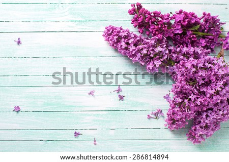 Fresh lilac flowers  on turquoise painted wooden planks. Selective focus. Place for text. - stock photo