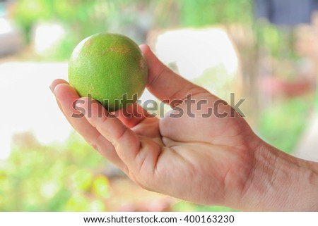 Fresh lime in Thailand no.4 - stock photo