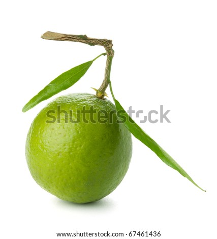 Fresh lime with green leafs. Isolated on white - stock photo