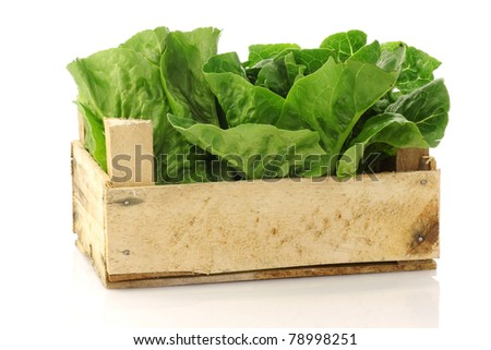 "fresh ""little gem"" lettuce in a wooden crate on a white background - stock photo"