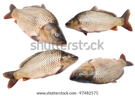 Fresh live fish is isolated on a white background