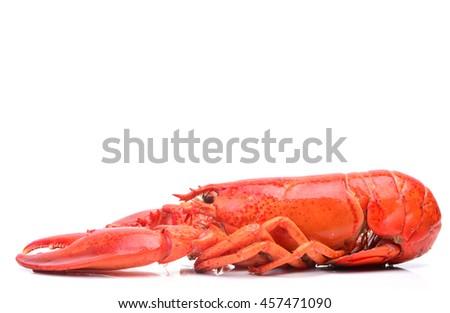 Fresh lobster   - stock photo