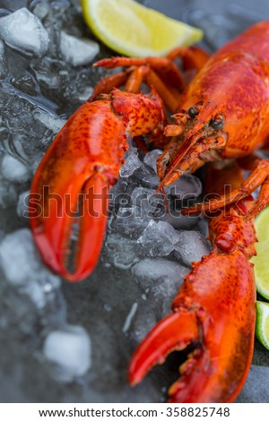 Fresh Lobster Chilling on Ice with Wedges of Lime - Still Life of Celebratory Lobster Dinner  - stock photo