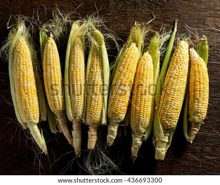 Fresh local organic corn on the cob against a rustic harvest table background. - stock photo