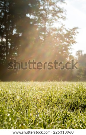 Fresh Look Green Grassy Field with Warm Sun Rays. Captured on Morning Time. - stock photo