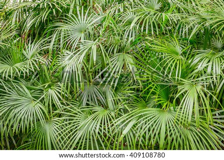 Fresh Lush Green Palm Leaves in Tropical Forest - stock photo