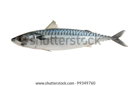 Fresh mackerel fish isolated on the white background - stock photo